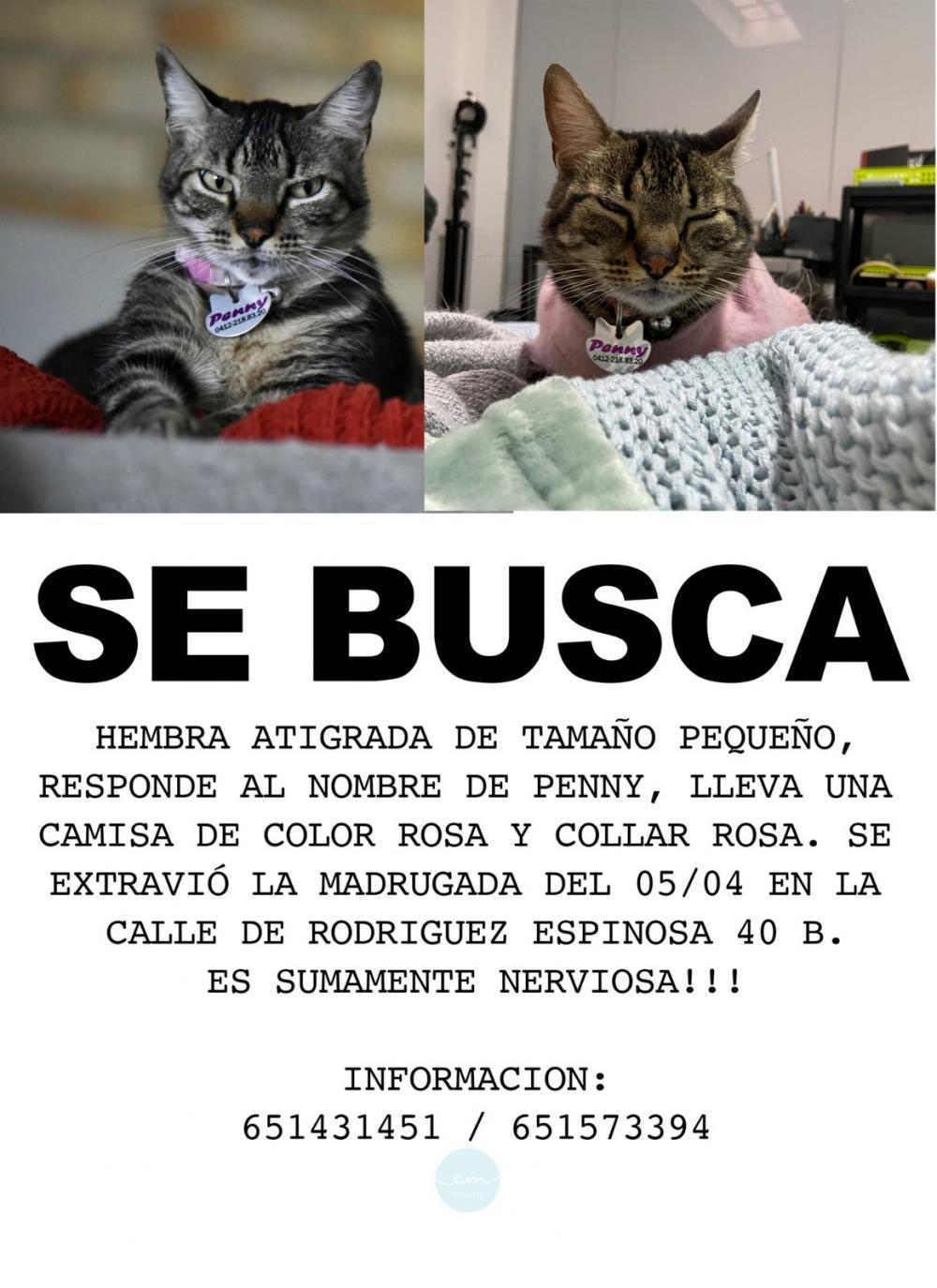 Perro perdido MESTIZO - DESCONOZCO LA RAZA en Vallecas (Madrid)