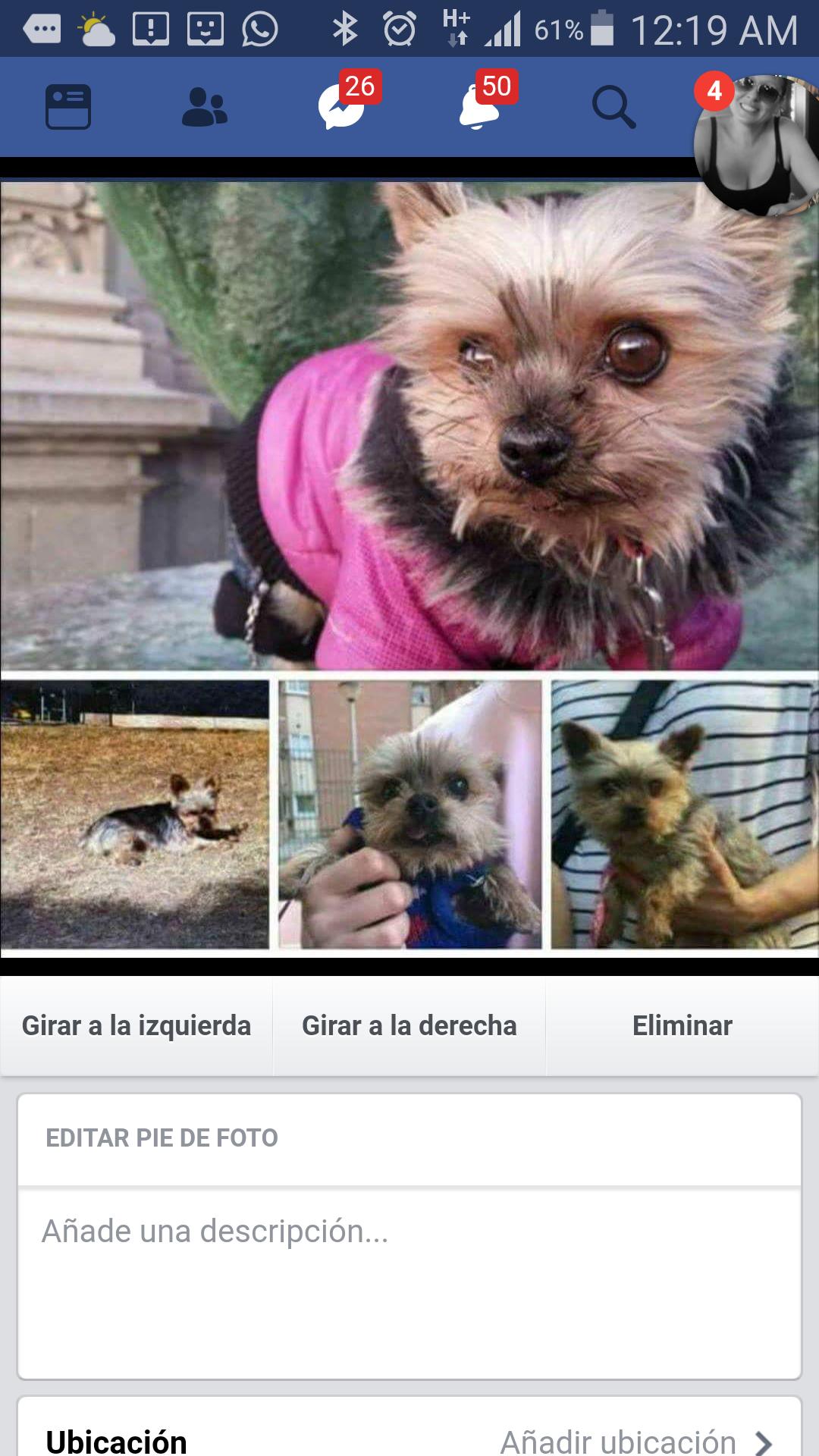 Perro perdido  en  ()