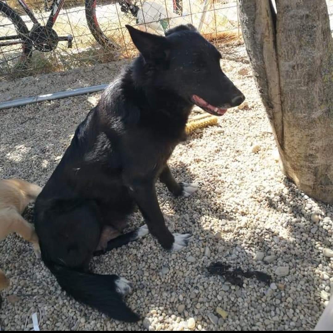 Perro perdido MESTIZO - DESCONOZCO LA RAZA en Bétera (Valencia)