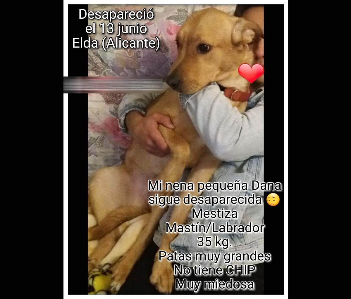 Perro perdido MESTIZO - DESCONOZCO LA RAZA en Elda (Alicante)