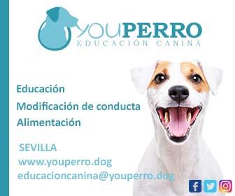 Youperro Educación Canina - Educación - Modificación de conducta - Alimentación